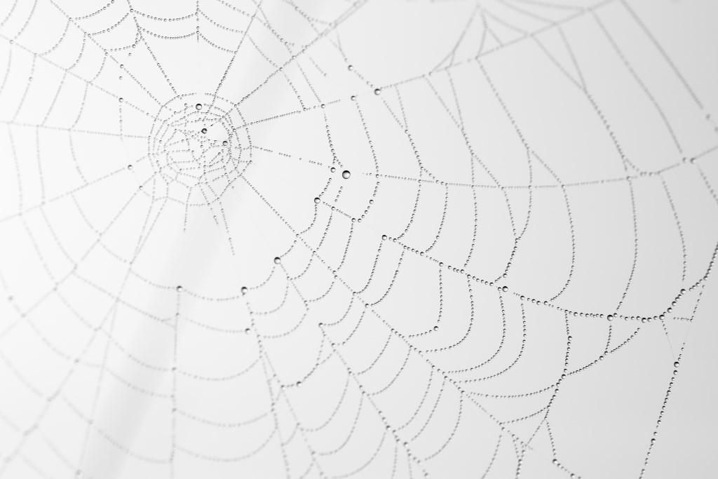 Winnaar Kids Award: Het web zonder spin. Duco Slooff (8), Zeist  © Persgroep