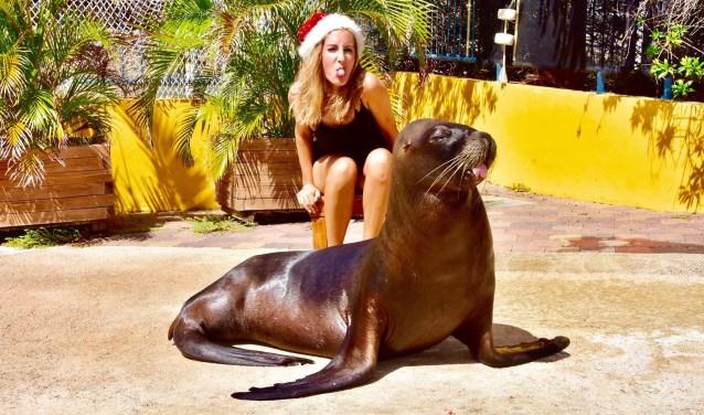 Krista Krijger vertrok in 2014 naar Curaçao en tegenwoordig werkt ze met zeeleeuwen in het Curaçao Dolphin Therapy Center.