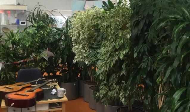 De planten hebben de Krachtfabriek omgetoverd tot een Urban Jungle