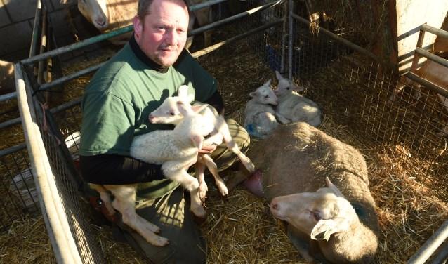 Herder John Sterrenburg met 'zijn' vierling. Moeder schaap houdt het met argusogen in de gaten.