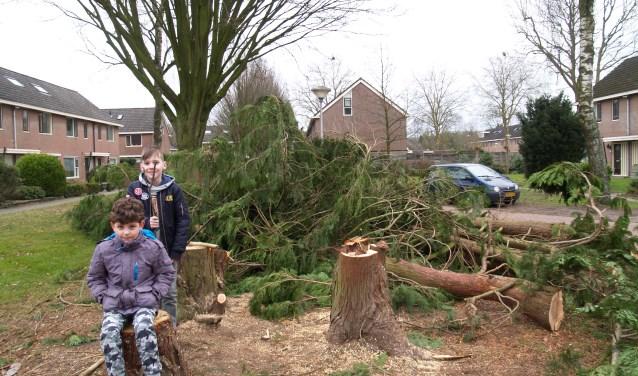 Kinderen kunnen heerlijk op de overgebleven takken ravotten maar niet iedere buurtbewoner vindt het fijn, dat de boom ten prooi is gevallen aan de cirkelzagen van het Groenbedrijf. (foto: Alex Schokker)