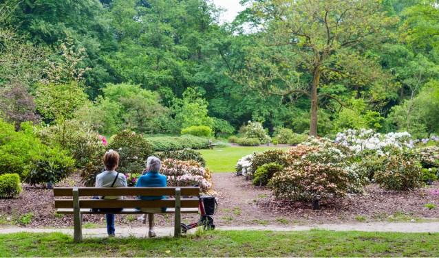 Arboretum Belmonte is een prachtig park met het unieke uitzicht over de Rijn. In 2020 hoopt het park Rijksmonument te worden.