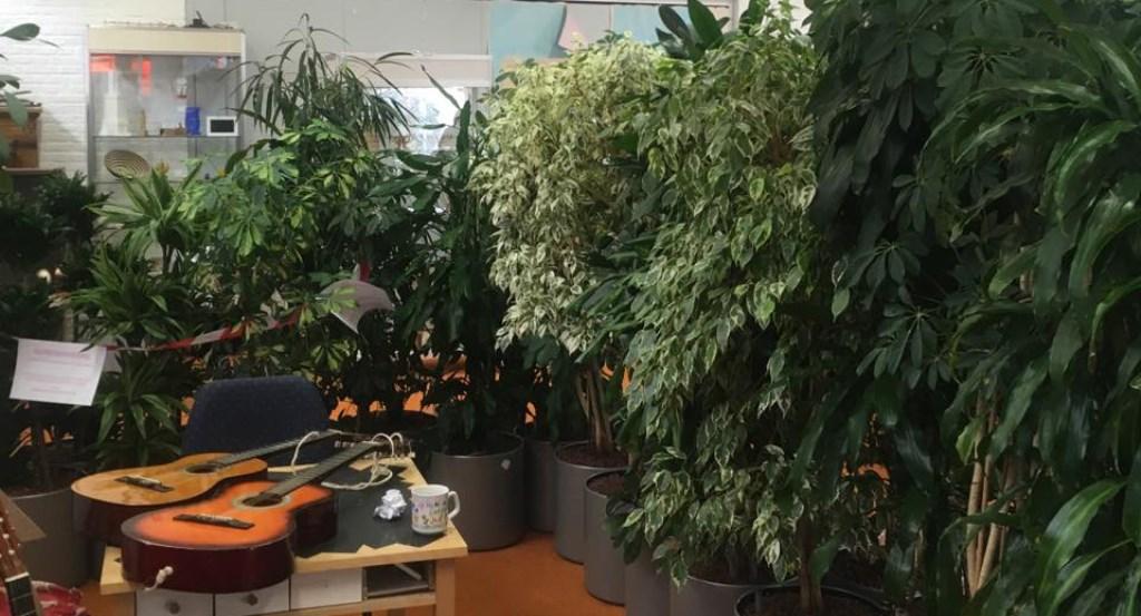 De planten hebben de Krachtfabriek omgetoverd tot een Urban Jungle Foto: Mai Linh Ly © Persgroep