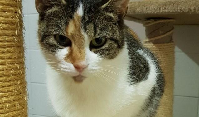 Molly is een zachtaardige kat in asiel De Crull. Men is voor haar op zoek naar een nieuw thuis zonder kinderen, katten zijn geen bezwaar.