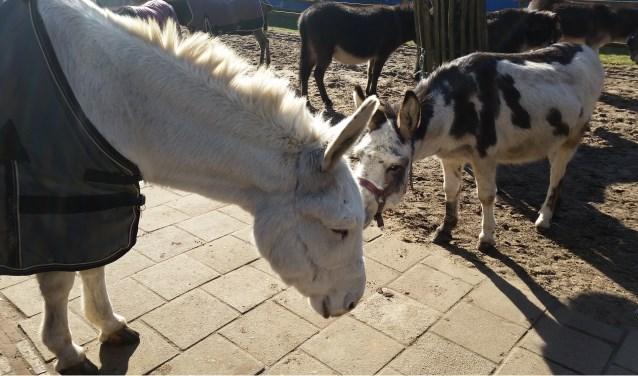 Menno (12) zoekt Anna (l) op voor een onderonsje. Hij was tot haar komst zelf 'de nieuwe'. FOTO: Ezelsocieteit