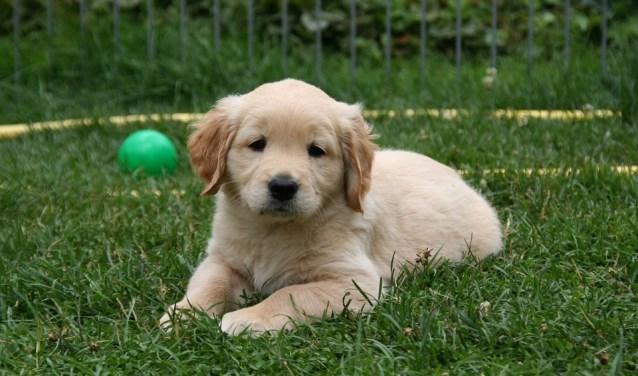 Heeft u ook een schattige puppy maar nog geen cursus gevolgd? Dan is het nu mogelijk om in te stromen!