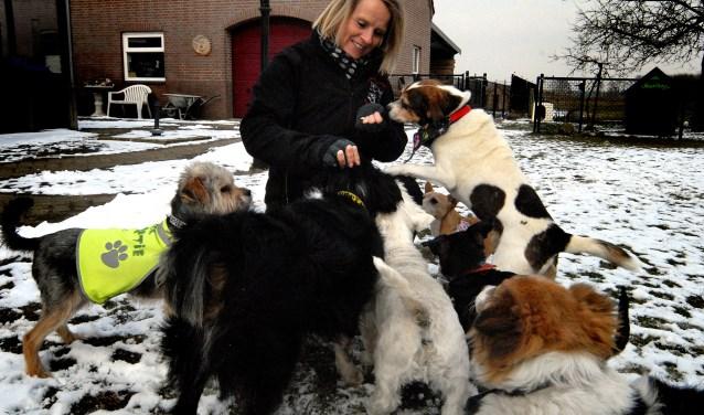 Liane Leeijen  vangt thuis zwerfhonden op en zoekt nieuwe baasjes voor hen. (foto: Tom Oosthout)