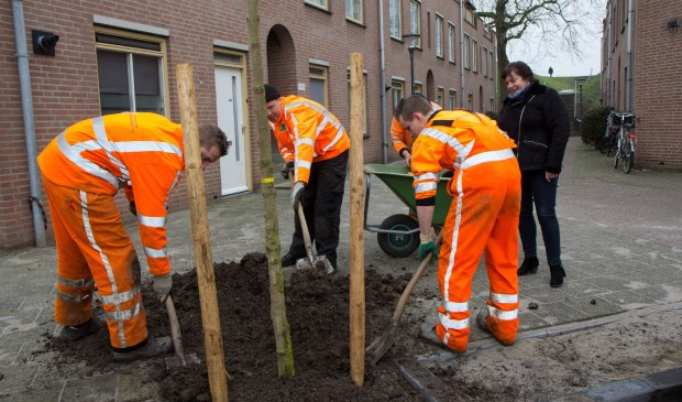 Wethouder Eva Dansen kijkt toe hoe een boompje wordt geplant. Eigen foto