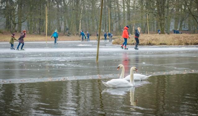 Zwanen_IJBM Schaatsen op de ijsbaan De Bilt_