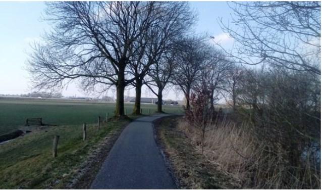 De drie meest linkse bomen wil Heusden kappen.