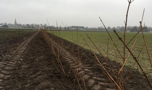 Er is begonnen met de aanleg van de heggen en houtwallen.