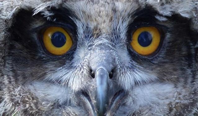 Wat vind je allemaal in een uilenbal? Dat ontdek je tijdens het uilenballen pluizen bij de molen van Frans. Foto: Mark Zekhuis