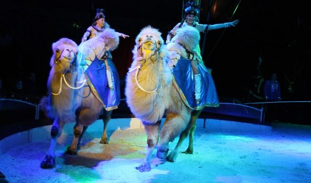 Basis achter de gehele productie is de bekende circusfamilie Freiwald, een 9-koppig gezelschap dat zowel voor als achter de schermen het Nederlandse circusbedrijf runt.