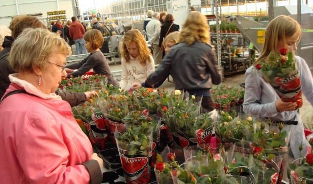 Bij Star Roses in Poederoijen kun je de potrozen bekijken. In de regio kun je nog bij vier andere bedrijven terecht tijdens Kom in de Kas op zaterdag 7 april.