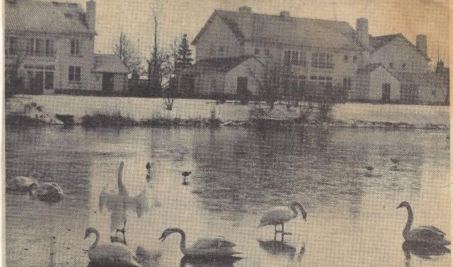 """Lemmens: """"In onze tijd waren er veel 'wilde' dieren zoals ganzen, zwanen, otters en eenden op het kleigat.'"""