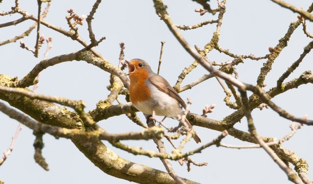 De vogels zingen al vroeg hun lied, dus de excursie start ook vroeg.