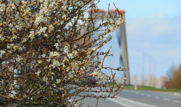 Als u het krenteboompje nu plant dan kunt u het volgend jaar genieten van de heerlijke vruchten.