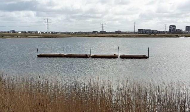 Ook in de Eendragtspolder komen nu volop kansen voor visdiefjes om zich voort te planten.