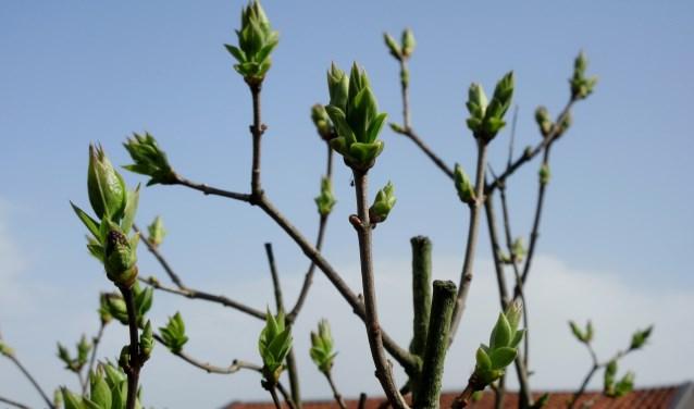 De natuur staat op springen: het wordt nu écht voorjaar.