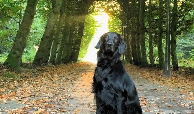 Over Zorro kom je straks van alles te weten. Baasje Arianne Doornbos woont vlakbij het park. Samen komen ze er vaak.