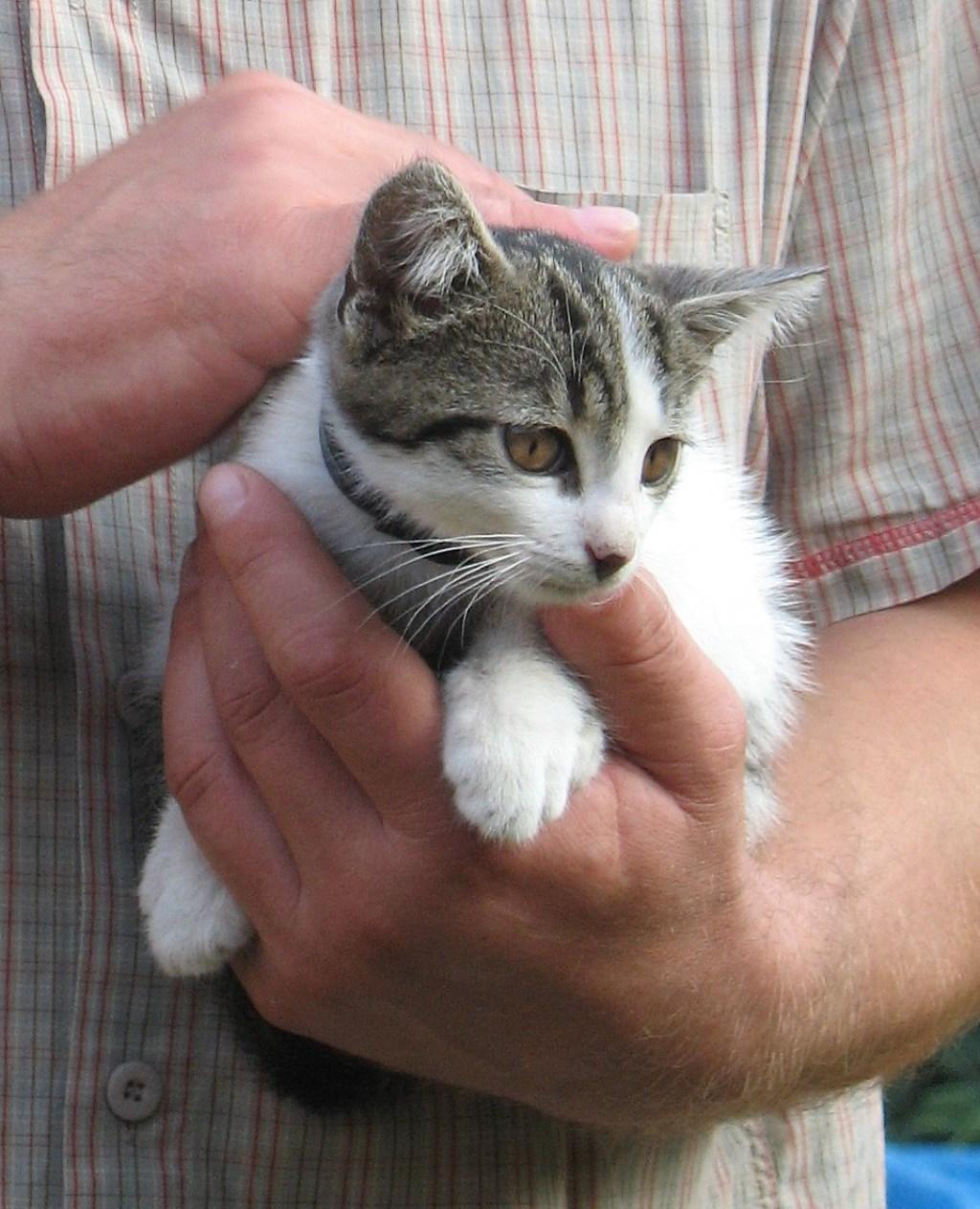 De dier-sociaal medewerker schiet te hulp bij de verzorging van huisdieren. Foto: Freeimages.com.