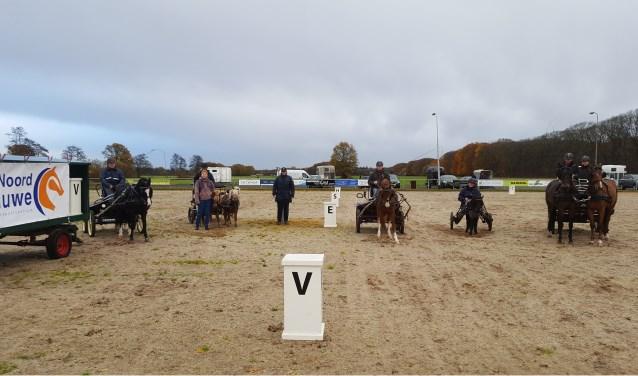 Een, twee of vier paarden of pony's: vanaf 16 april kan iedereen (beter) leren mennen bij PSV Noord Veluwe. Foto: Joëlle Berghuis
