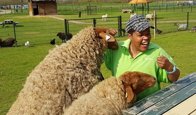 Zondagmiddag 29 april van 12.00 tot 16.00 uur is het schaapscheerdersfeest in het Horsterpark.Naast het schapen scheren is er nog veel meer te beleven.