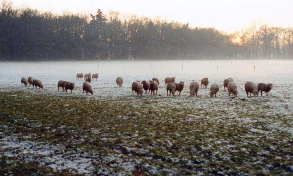 winter Foto: Derk Huizinga © Persgroep