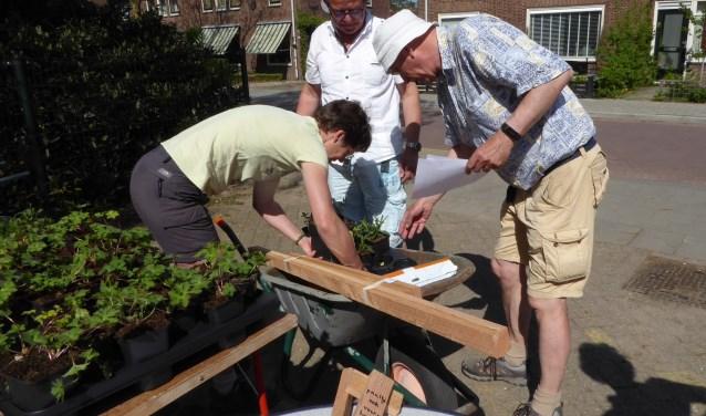 Leden van Bloemrijk Bennekom deelden op het plein van de Alexanderschool grond, planten en eventueel het raamwerk uit dat nodig was voor de boomspiegels.