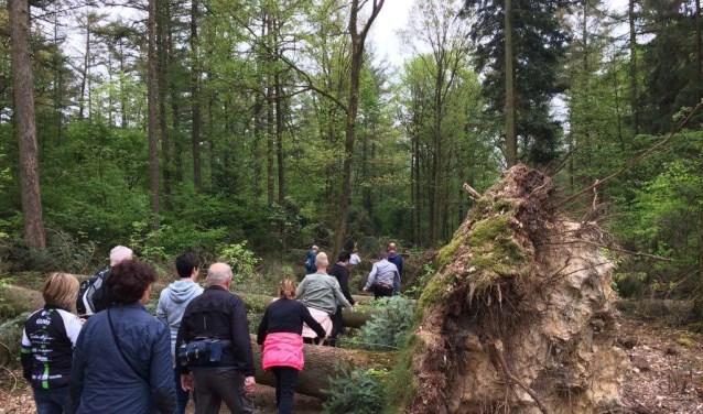 Tijdens de wandeling kwamen deelnemers ook omgevallen bomen tegen. Daar konden ze omheen lopen, maar er overheen klimmen is natuurlijk veel leuker! (foto: PR)