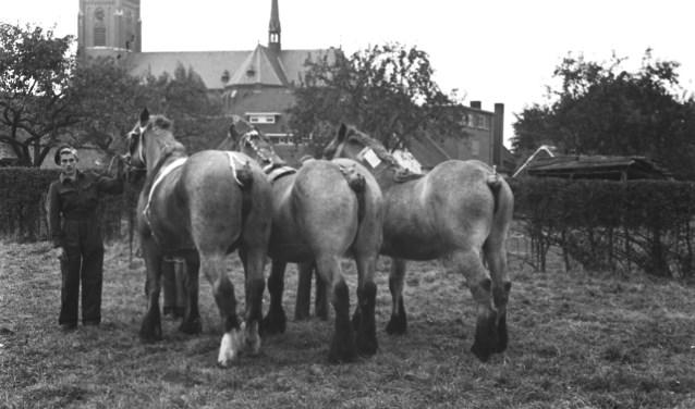 De Land van Cuijkse Paardendagen vieren het 75-jarig jubileum op zaterdag 9 en zondag 10 juni.
