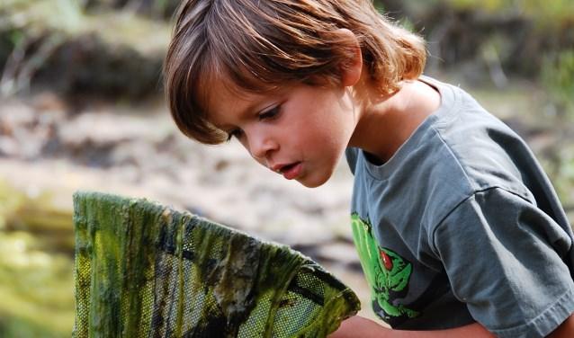 Kinderen kunnen met een schepnet allerlei waterdiertjes vangen tijdens Slootjesdag in Rijssen.
