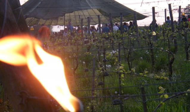 Vuren, fakkels en warmte geven de wijngaard een prachtige aanblik.