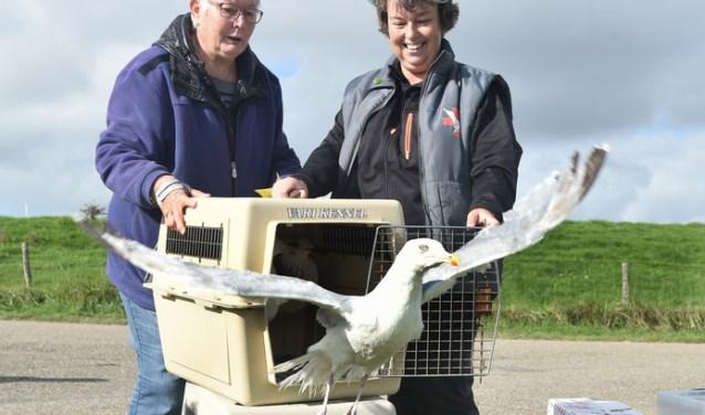 Coby Louwerse (links) en Martina van Zalen van het jubilerende vogelasiel De Mikke laten enkele meeuwen los. FOTO: WEBSITE DE MIKKE