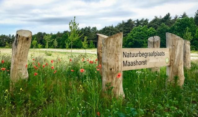 Natuurbegraafplaats De Maashorst is deze week te bezoeken. (foto: eigen foto)