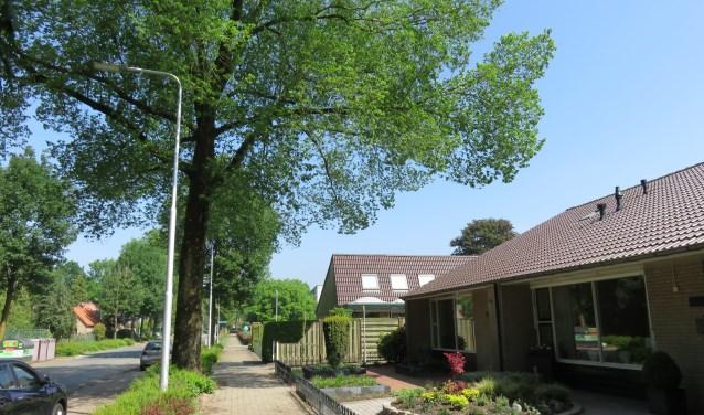 Bewoners van seniorenwoningen aan de Commandeursweg zijn bang dat de enorme iep omwaait en bovenop hun huisjes valt. De boom is instabiel sinds de storm in januari, maar de aanvraag voor een kapvergunning ligt stil omdat er in de top van de boom een ekster nestelt.