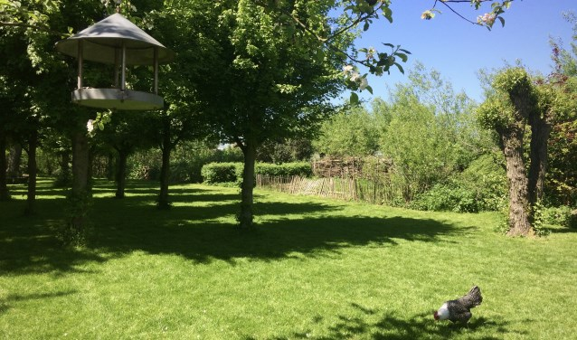 Zaterdag 12 mei is er Open Tuin op 't Struweel in Rijsoord.