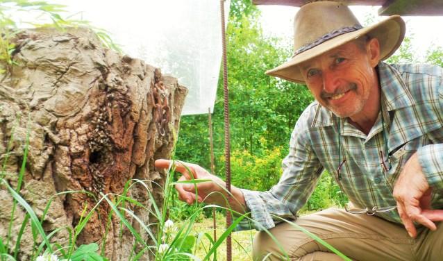 Imker Cok Hartkoorn bij het bijenvolk in de boomstam. Als mensen bellen, helpt Cok hen graag van hun onwelkome bijenvolk af. Vertellen doet hij ook graag. Zaterdag is iedereen van 10.00 tot 15.00 welkom om te kijken en te luisteren. Honing kopen mag ook natuurlijk.