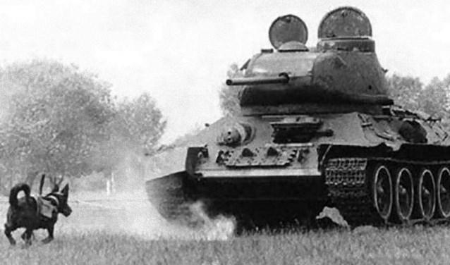De antitankhond: een hond met explosieven op zijn rug, getraind om onder vijandige tanks te duiken. Een zelfmoordopdracht. (foto: pr)