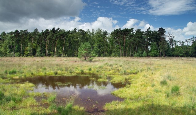 Heidelandschap op landgoed Klein Bylaer. Foto: PR