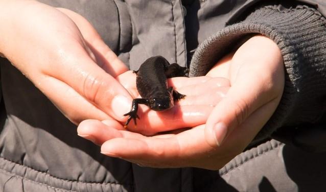 Welke dieren wonen in de poel van het IVN? Je ontdekt het tijdens het waterspektakel.