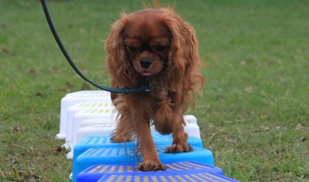 Honden worden op de proef gesteld. (foto: persfoto)
