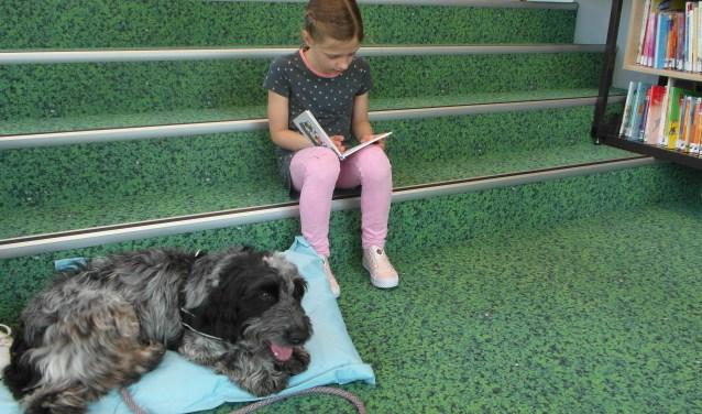 Kinderen gaan in de bibliotheek hondje Freddie voorlezen