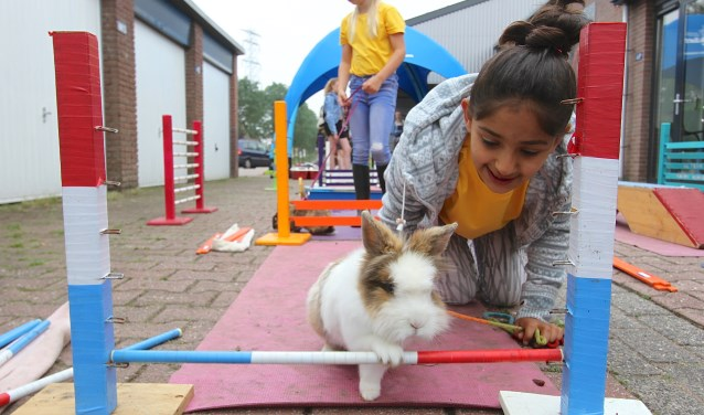 Dorsa (9) legt met haar konijn een hindernisbaan af. Konijn Hop is in veel landen een sport. In Nederland nog niet. Konijnen worden getraind door de Stichting SunFlowers Ranch, die is in Elden gehuisvest naast het AZC waar Dorsa woont. (foto: Kirsten den Boef)