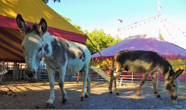 """""""Nederland is een mooi land om met het circus onderweg te zijn"""", zegt David van Circus Bossle. (Foto: Vincent Wolfs)"""