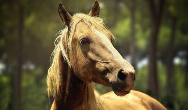 Even rust tijdens de Paardenmarkt. (Foto: Privé)