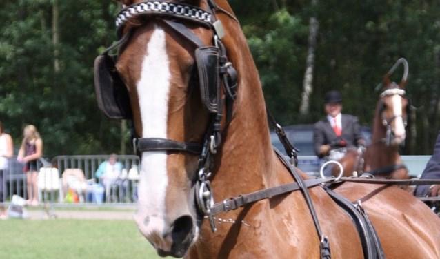 Op de Wielerbaan in Nieuwkuijk kun je zondag genieten van paardensport van de hoogste plank.