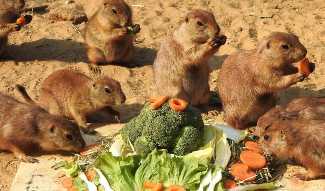 Bezoekers keken toe hoe de nieuwsgierige knaagdieren op het taartje afkwamen. (Foto: DierenPark)