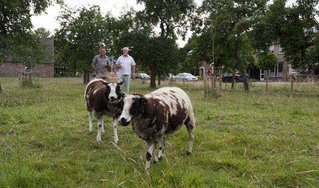 Pieter van Workum (links) en kartrekker Johan Snaar lopen tevreden door de gerenoveerde boomgaard in Andelst. (foto: Ellen Koelewijn)