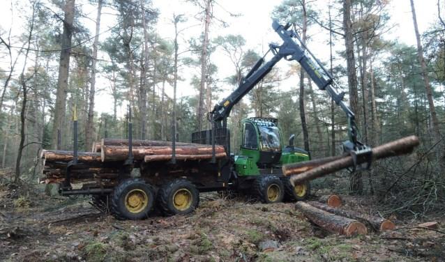De werkzaamheden betreffen voornamelijk het zuidelijke deel van de Witrijt. Foto: Erik Schram.
